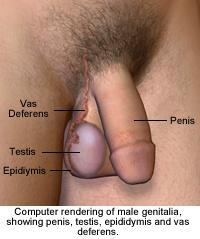 Medicina a impotência de homens